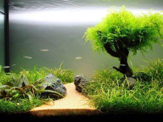 bitki akvaryumu low tech