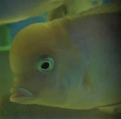 yunus_balık_akvaryum